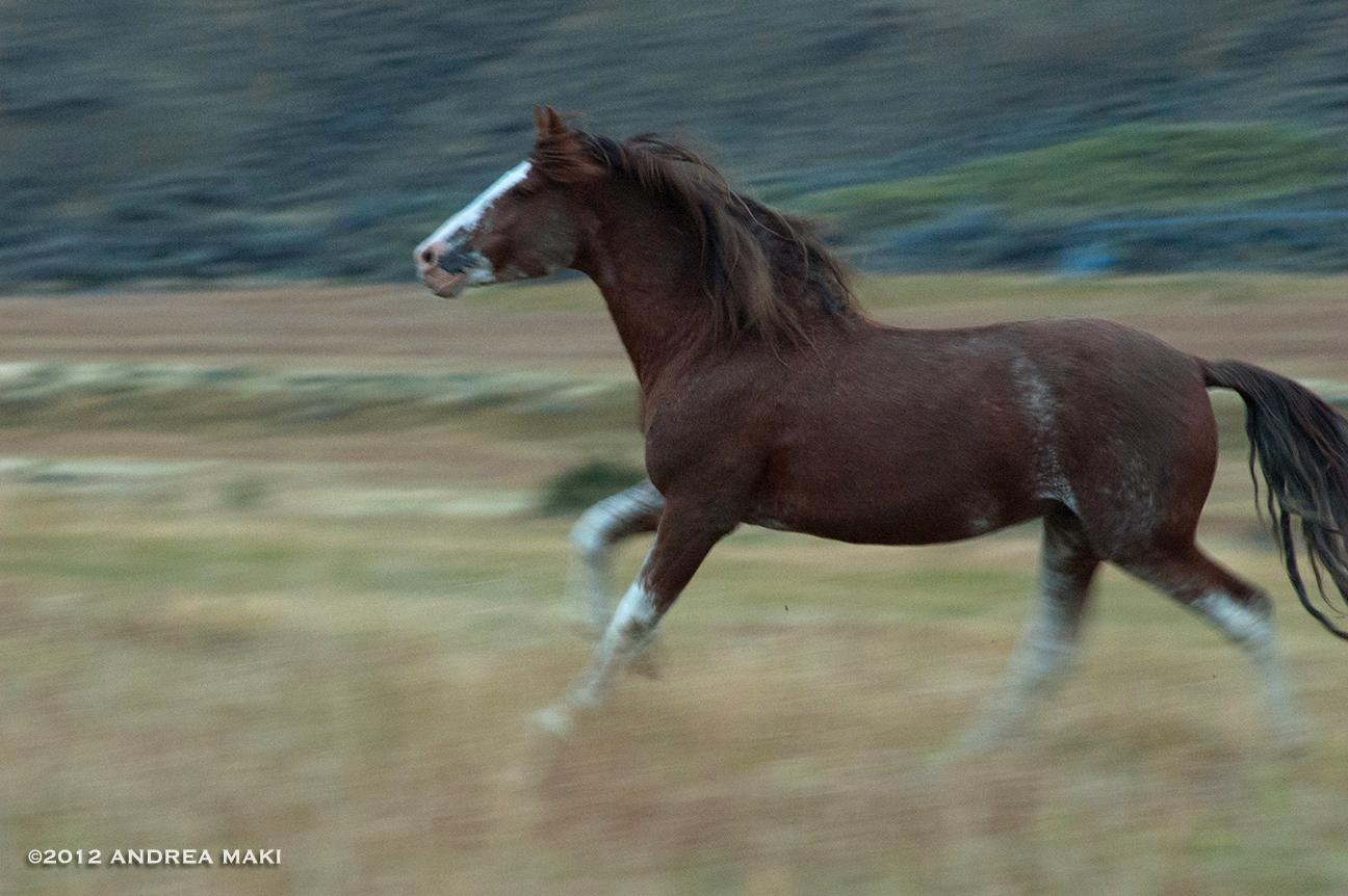WildRedGlory2012_NEWSITE.jpg