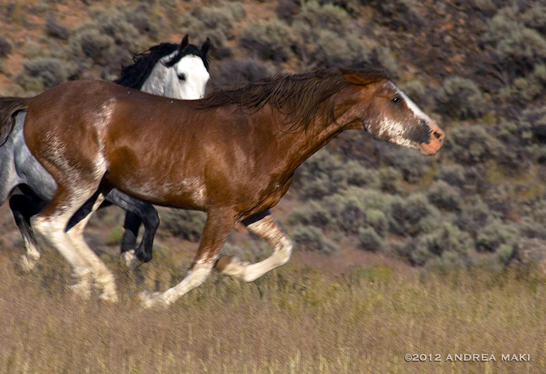 wildred_white2012_newsite.jpg