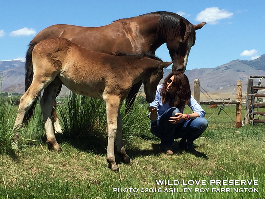 Andrea with baby Paiute and surrogate mom, Ginger.