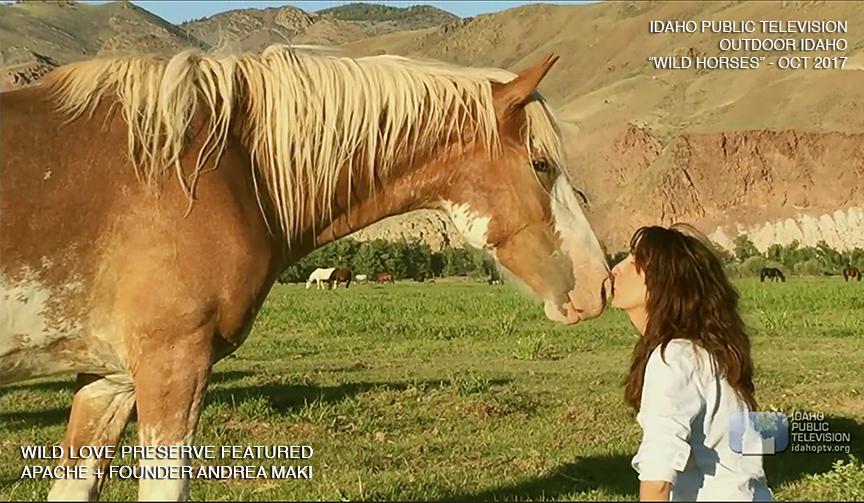 "Wild Love featured on Outdoor Idaho's ""Wild Horses"" Idaho Public Television,October 2017"