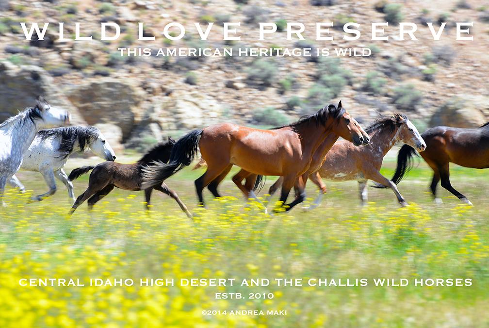 AndreaMaki-WildLovePreserveCard2015-72dpi.jpg