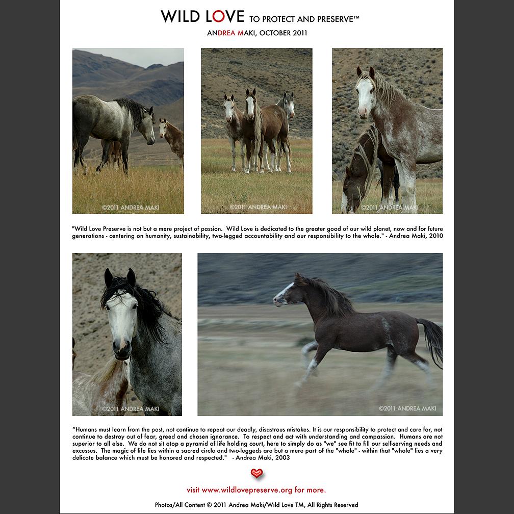 wildlove2011-promo.jpg