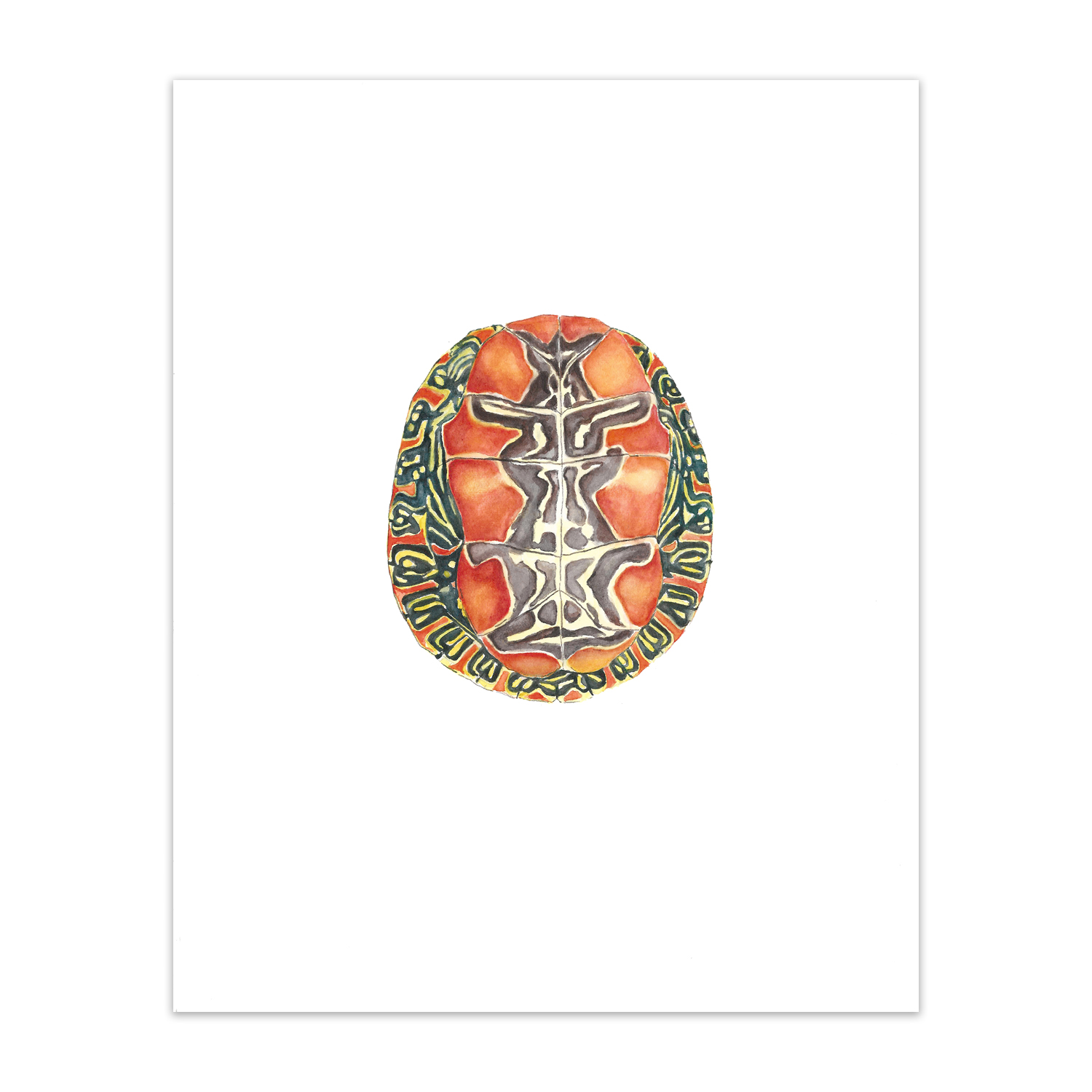 "Painted Turtle <br> <span style= ""font-size: 0.75em;""> 🔴  SOLD </span>"