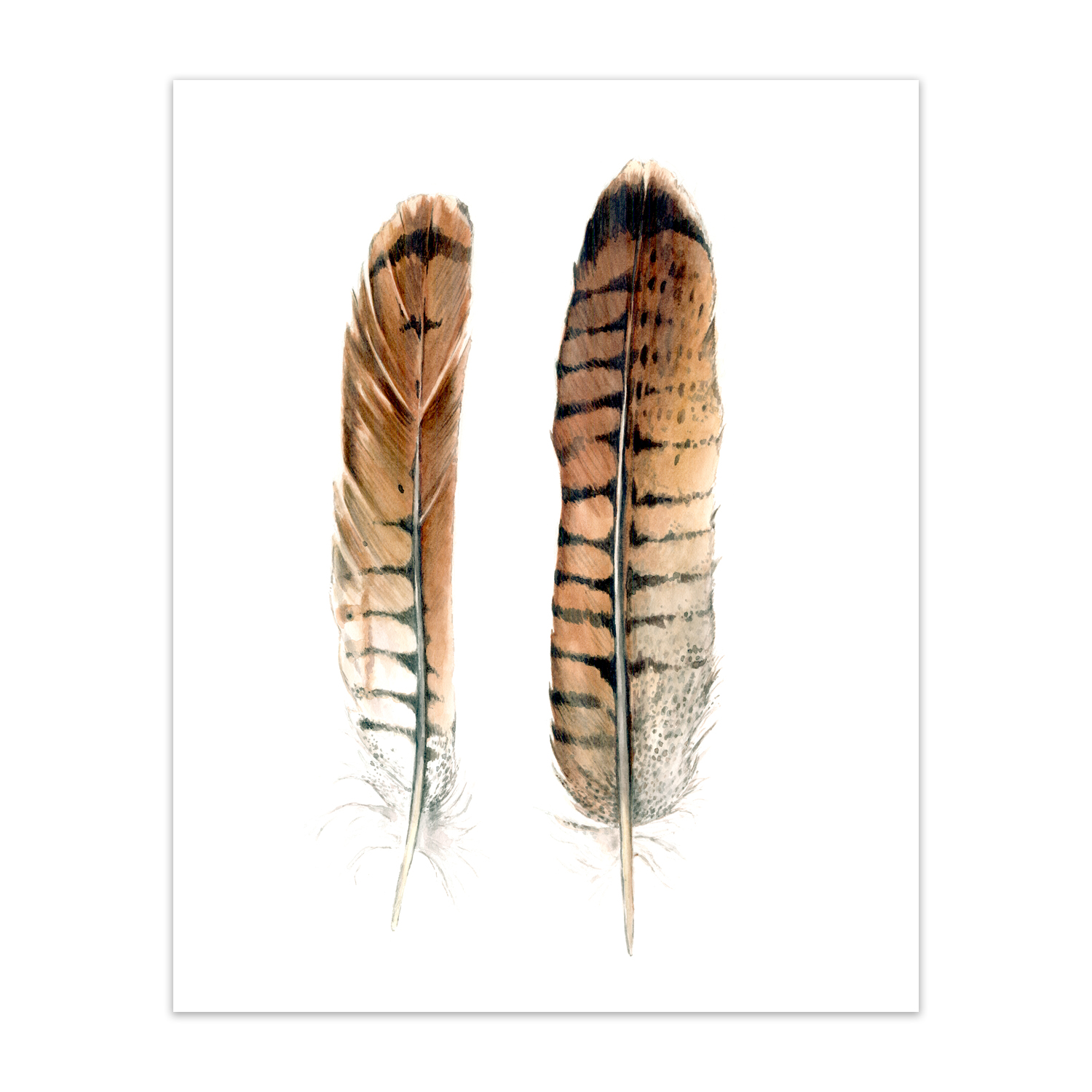 "Red Tail Hawk Feathers <br> <span style= ""font-size: 0.75em;""> 🔴  SOLD </span>"