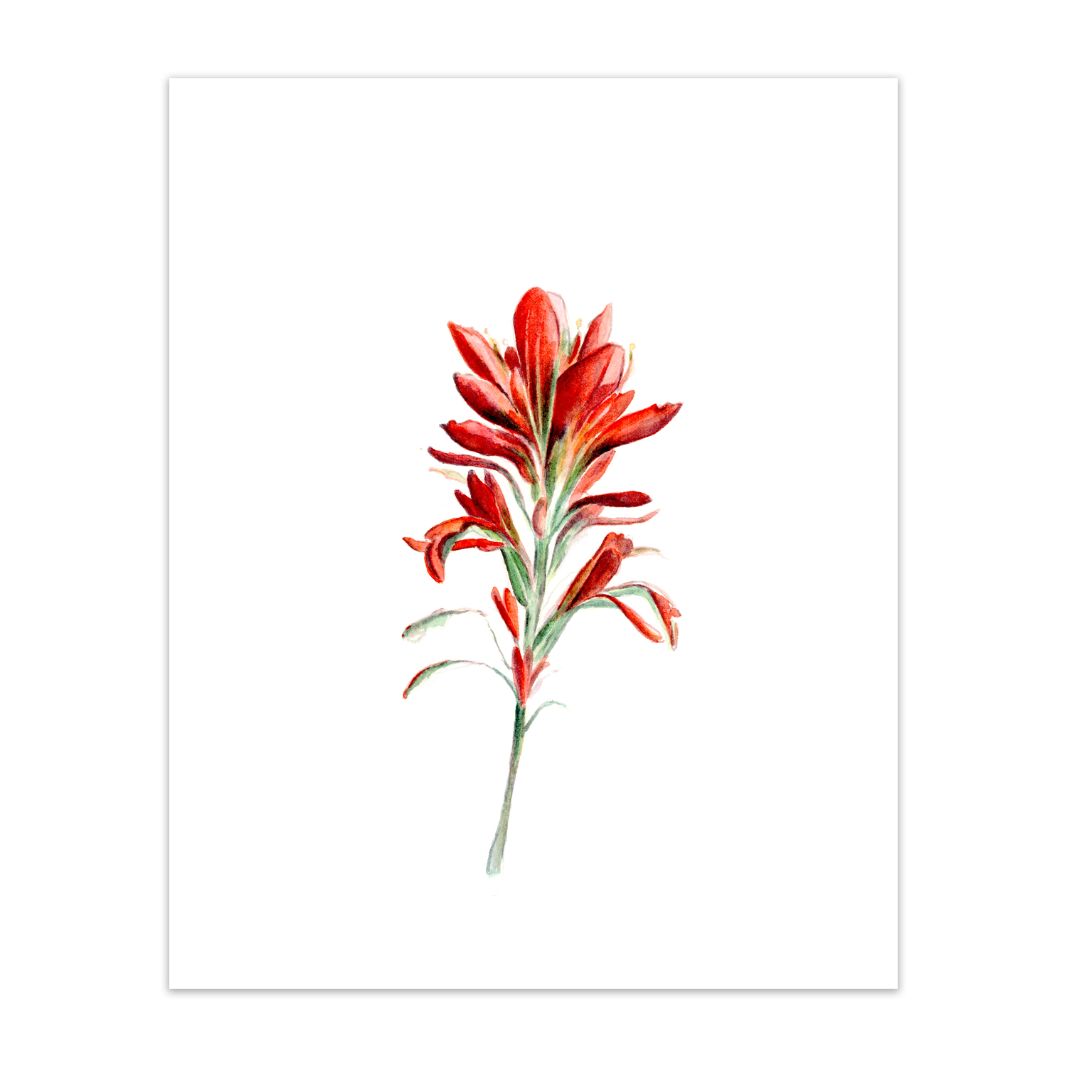 "Indian Paintbrush <br> <span style= ""font-size: 0.75em;""> 🔴  SOLD </span>"
