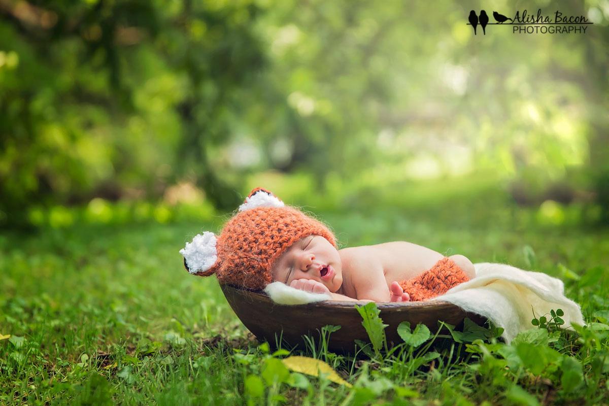 Outdoor newborn fox