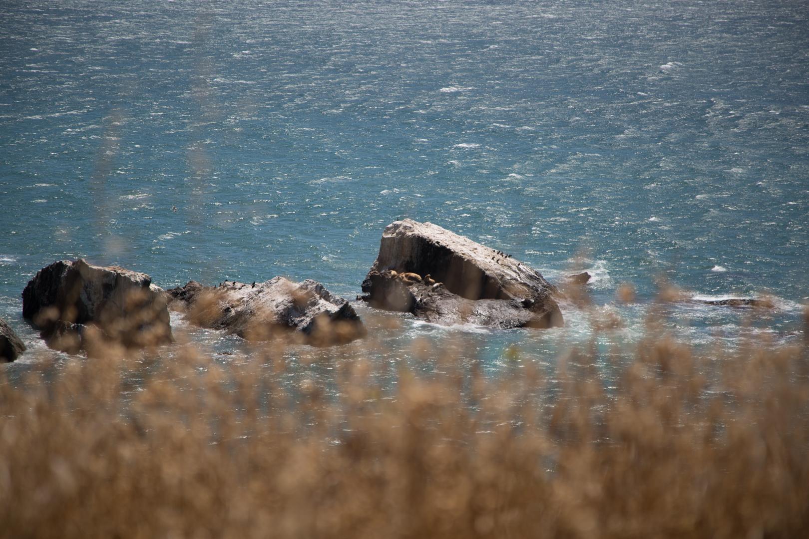 Lazy seals...