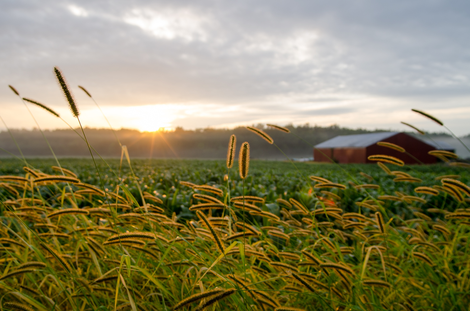 Farm Country -