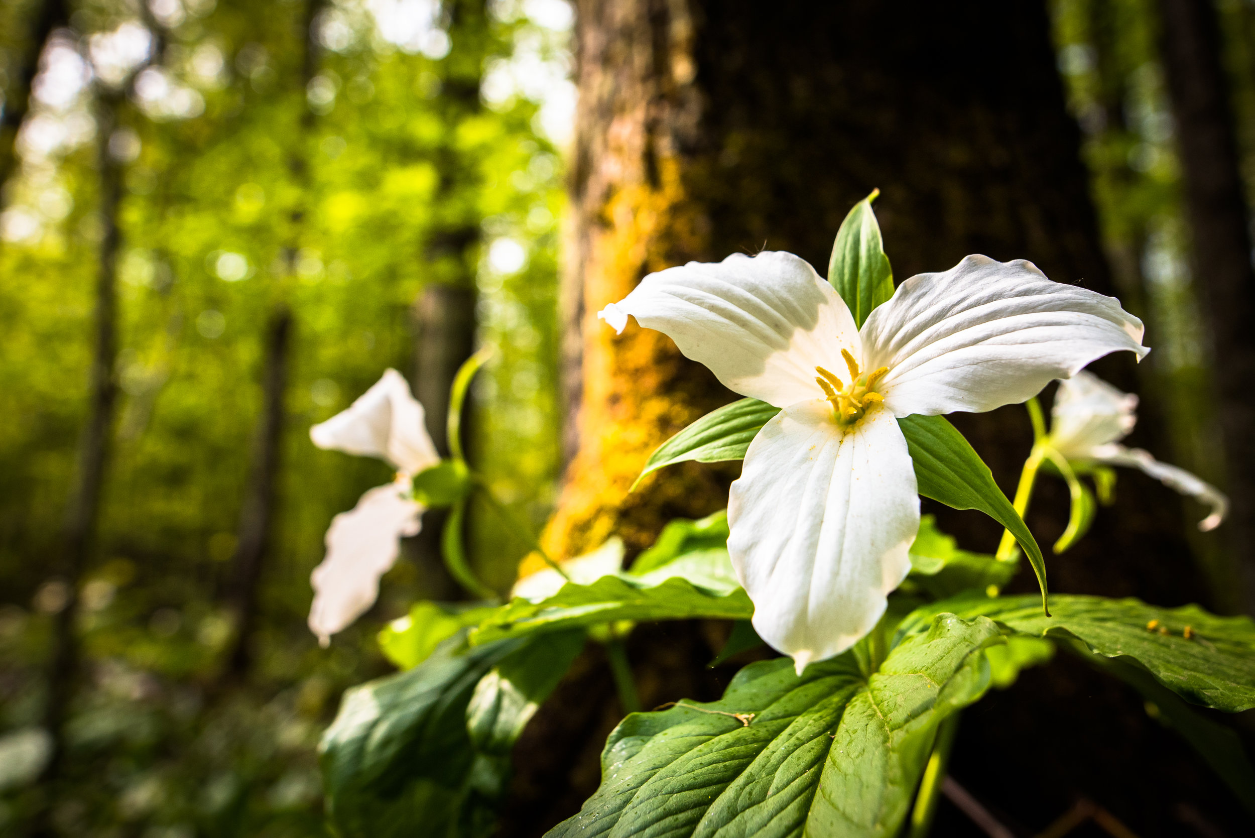 Wildflowers and Wild Trees -
