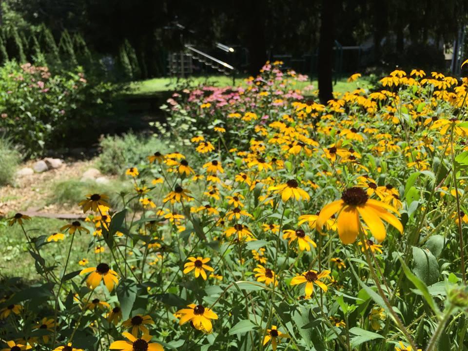 GreenUU- butterfly garden-3.jpg