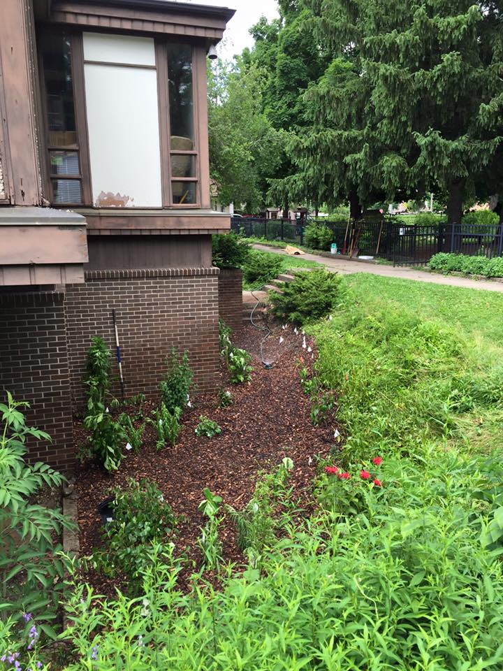 Green UU's replant slopes with native plants project