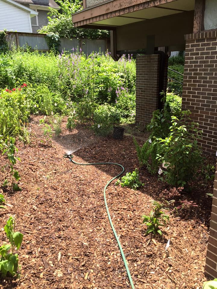 GreenUU- butterfly garden-6.jpg