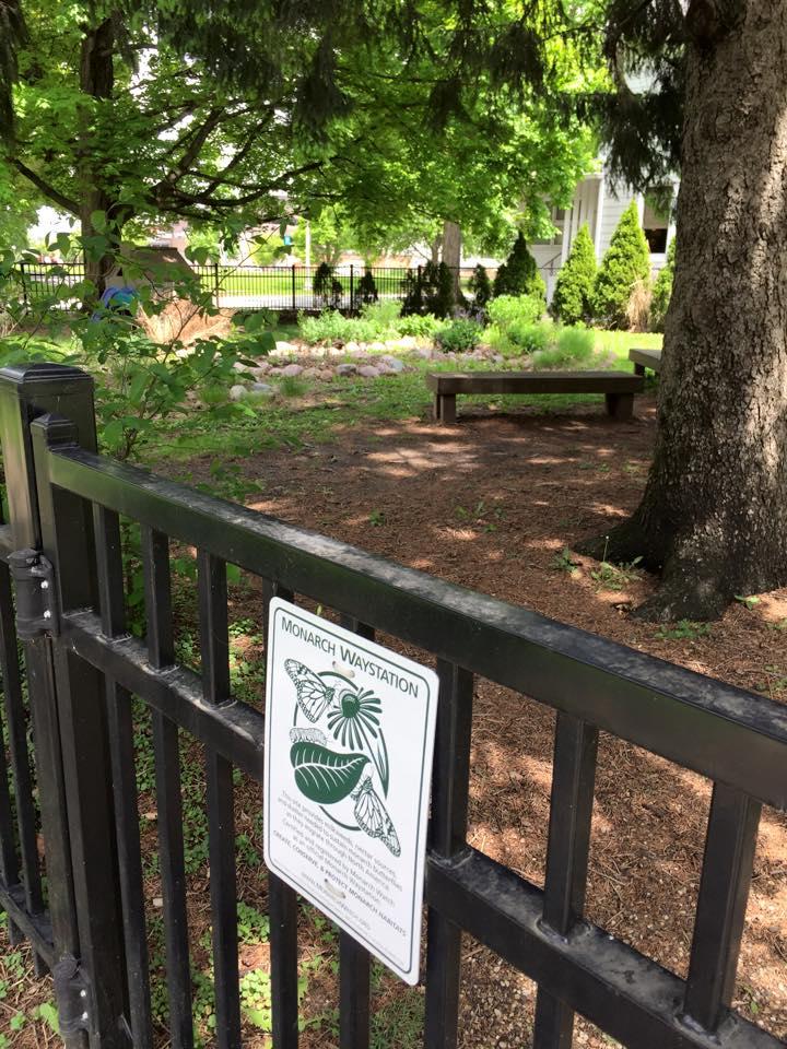 GreenUU- butterfly garden-10.jpg
