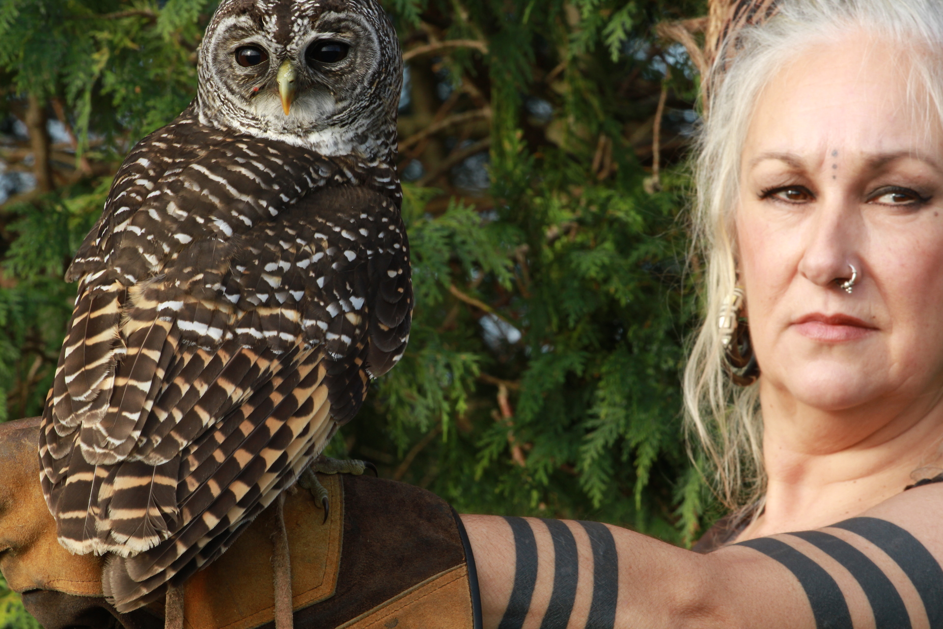 Jo Crow and the Owl