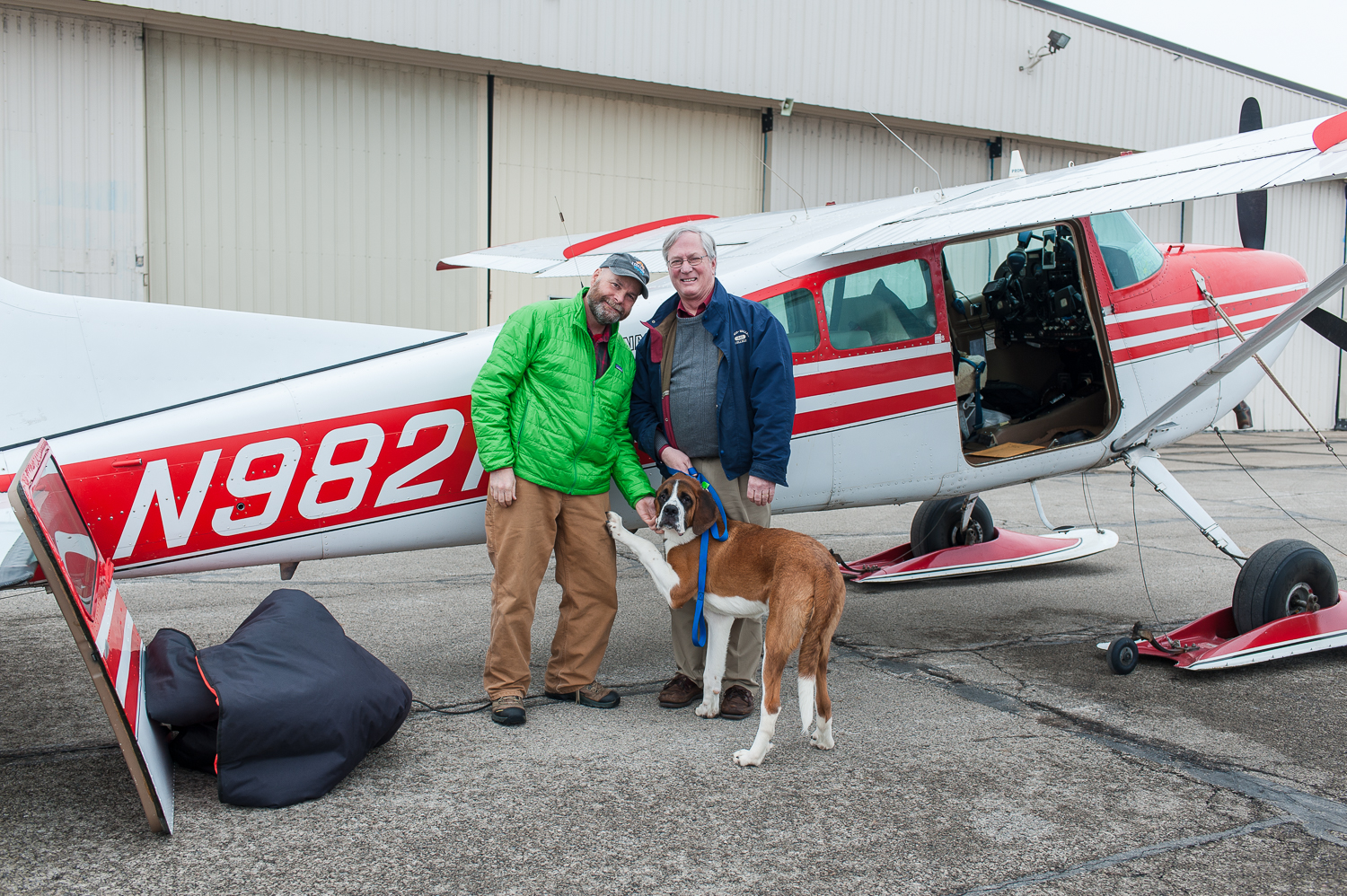 In Cleveland, transferring this very sweet 6 months old St Bernard puppy from another pilot in the Pilots and Paws network.