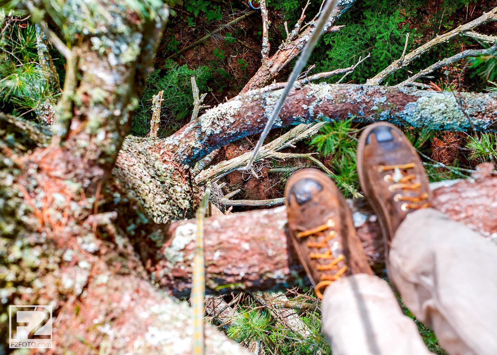 Eastern-White-Pine-Tree-Climb-8_1.jpg