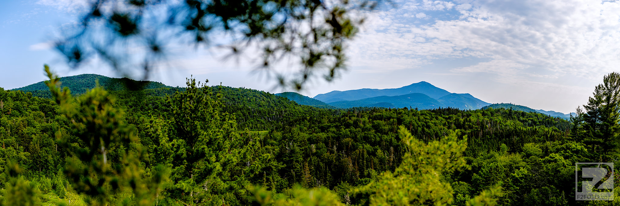 Eastern-White-Pine-Tree-Climb-Panorama_1.jpg