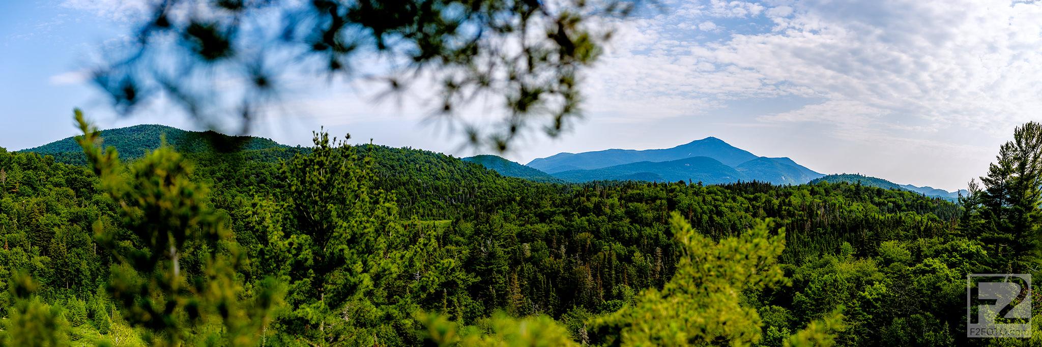 Eastern-White-Pine-Tree-Climb-Panorama_1.jpg