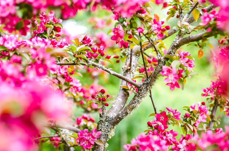 F2FOTO-Spring-Bloom-1500px-85-Mini.jpg