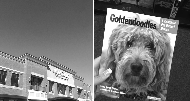 Barnes & Noble and Goldendoodles