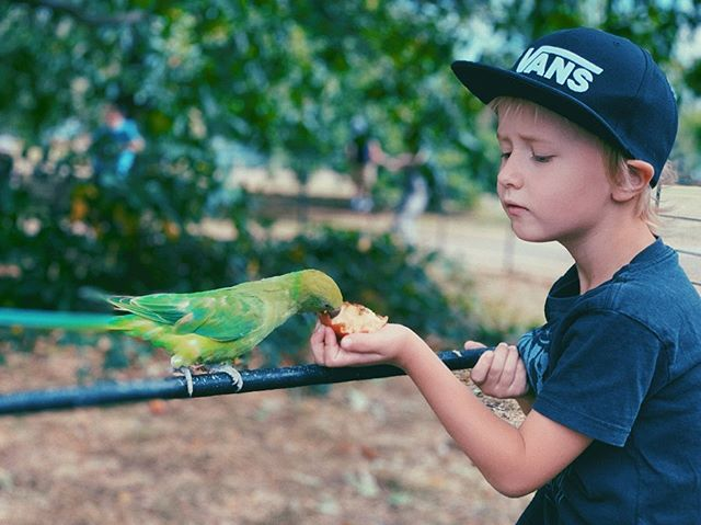 🇬🇧💫 London exceeds expectations when parrots (okay parakeets) eat out of your hand on the first day! 🦜💛
