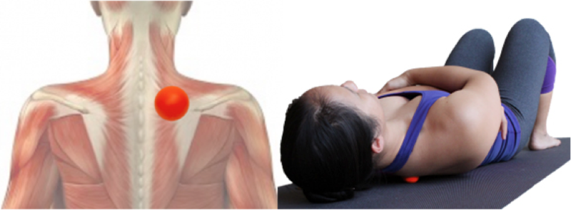 Tennis ball self-myofascial release for upper back. Only press around soft tissue, avoid rolling on the spine.