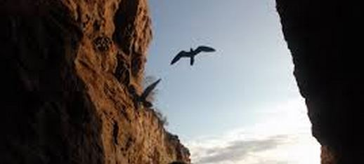bird and cliff