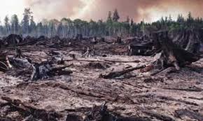 environemental destruction