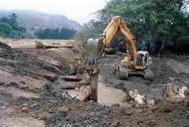 trees bulldozer