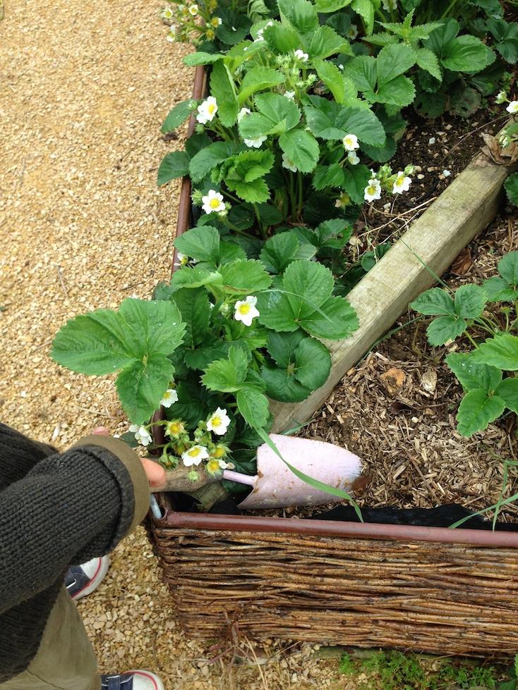 Gardening Skills.jpg