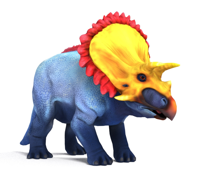 Vividly colored toromorph Triceratops. Keratin covered skull with red caruncle bordered frill.