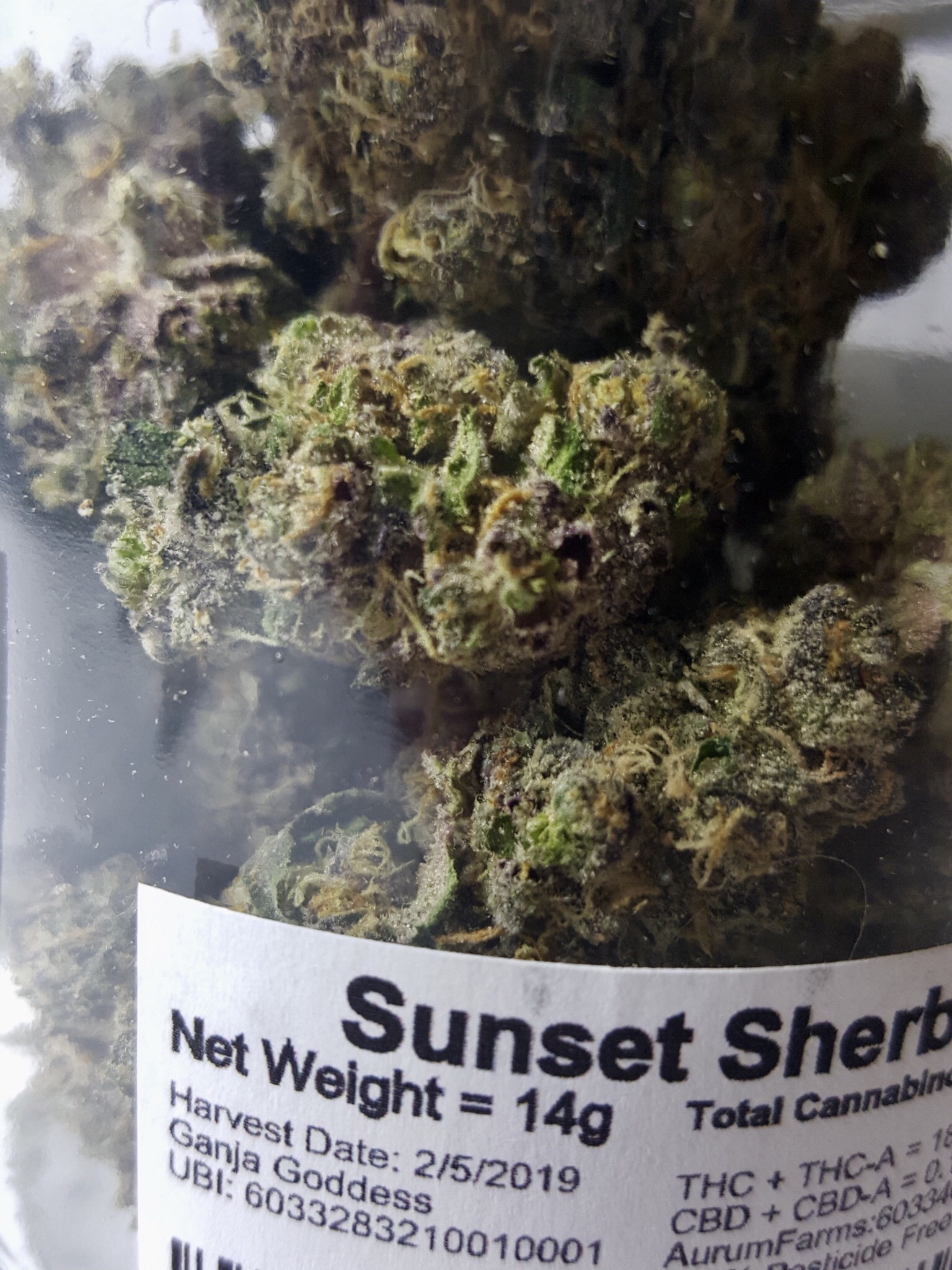 Aurum Farms Sunset Sherbert Ganja Goddess