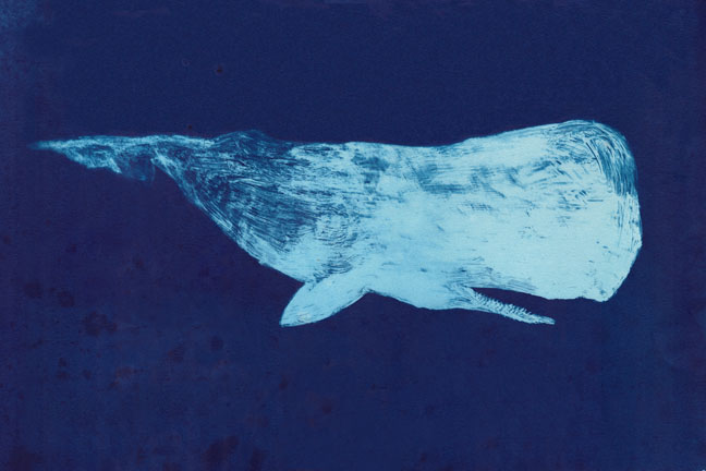 "Moby Dick of the Deep    cyanotype print, edition of 12  22"" x 30""  2012  (editions 11/12 and 12/12 available)  (Available as giclee print,  click here .)"
