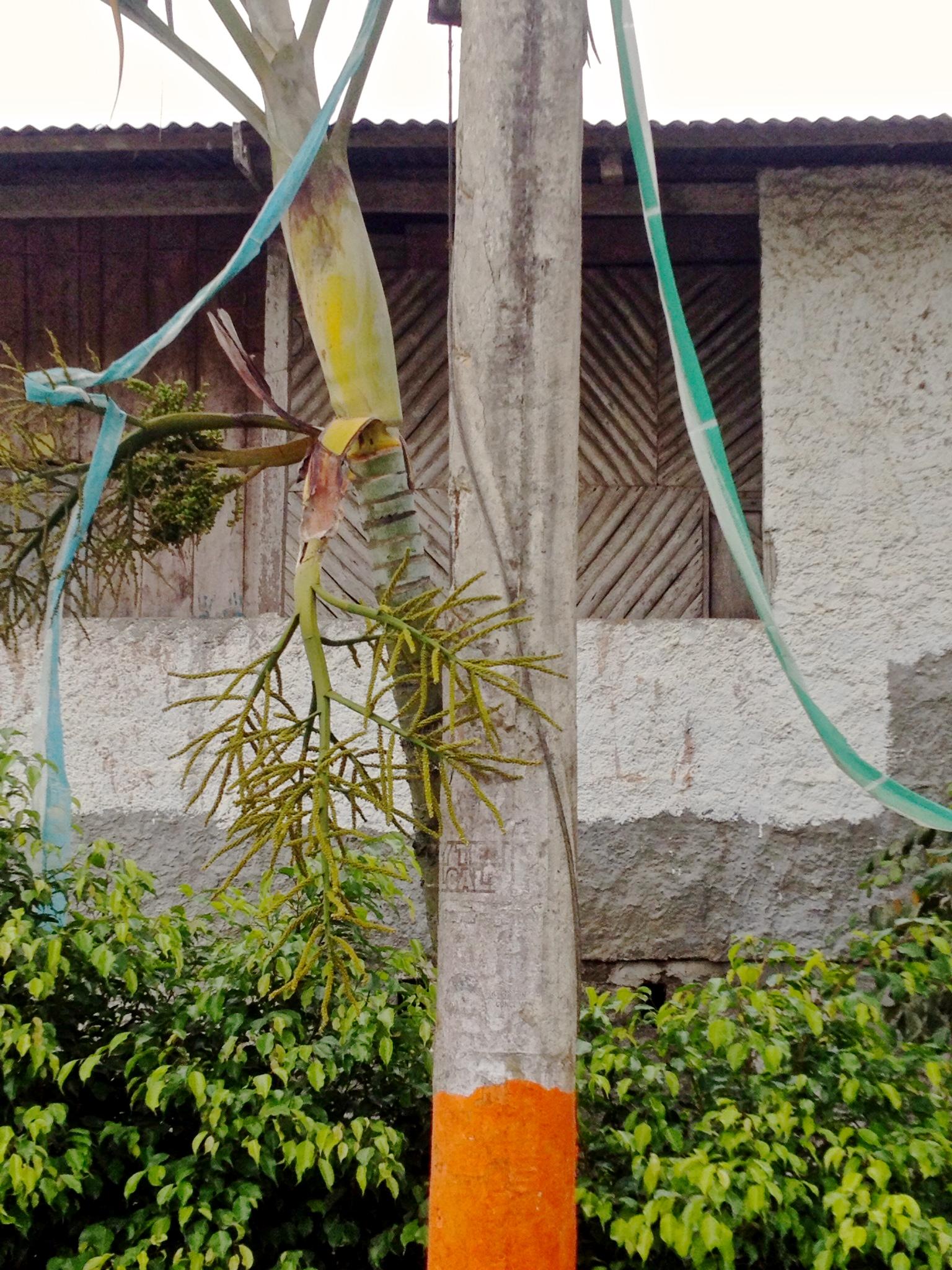 Tropic Flare    digital  2014