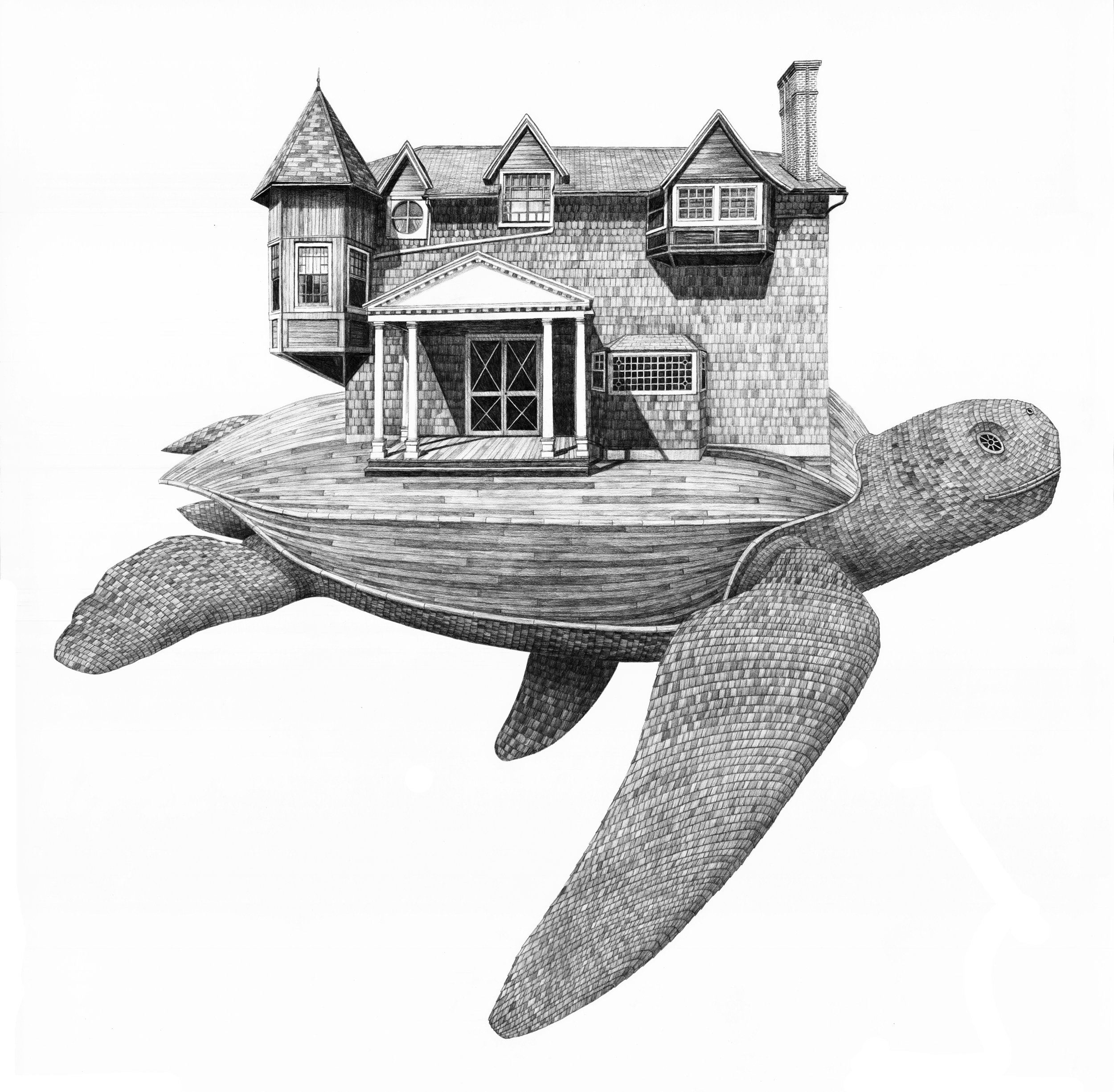"""Moran's Turtle    graphite on paper  36""""x 36""""  2017  (available)"""