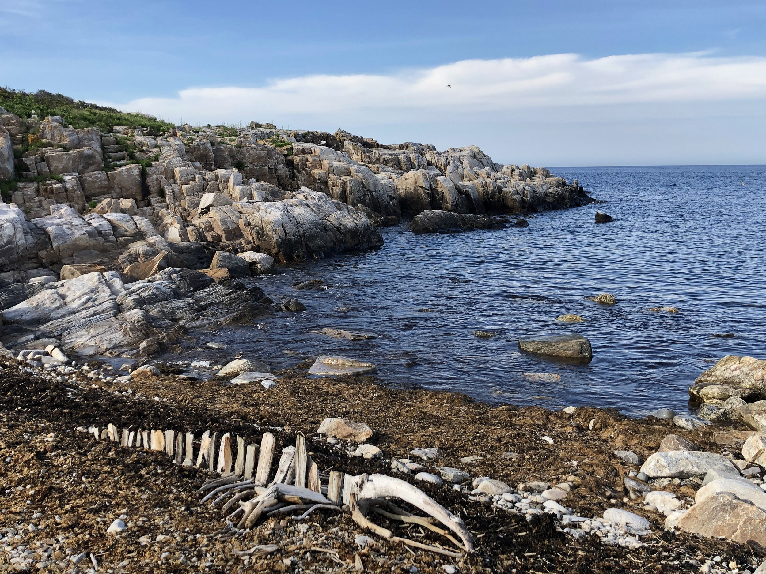 Right Whale Driftwood Skeleton    driftwood  approx. 9' x 2.5'  assembled on location at Broad Cove, Appledore Island, Isles of Shoals, Maine. June 2019.