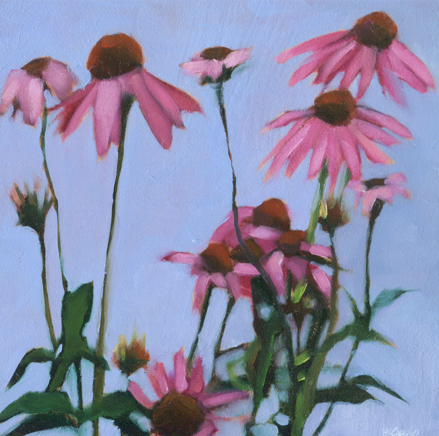 Echinacea McGauley.jpg