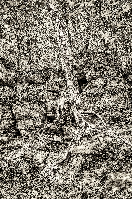 Tree at Parfrey Glen
