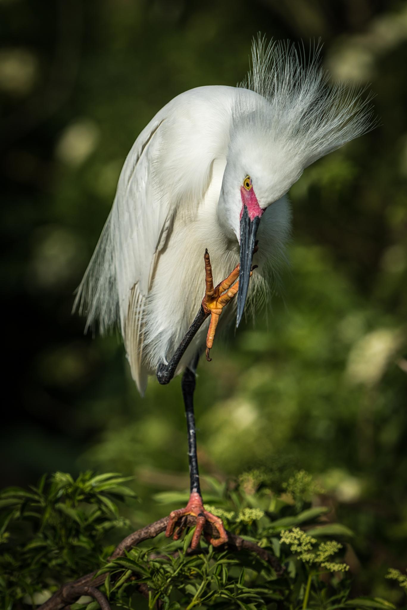 Cleaning Beak
