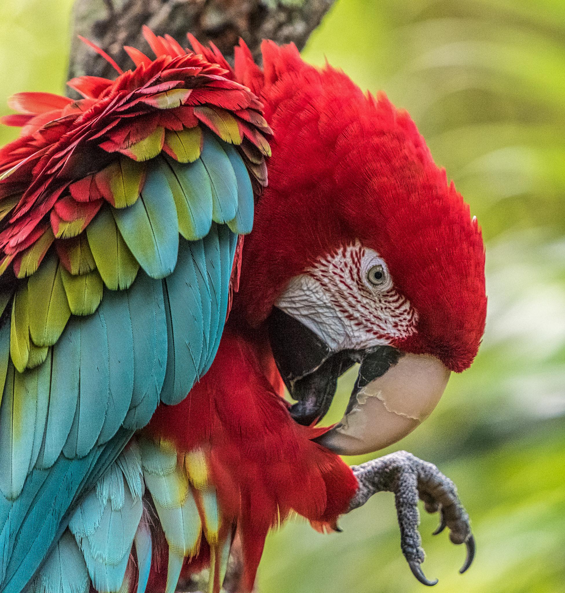 Parrot Closeup 5