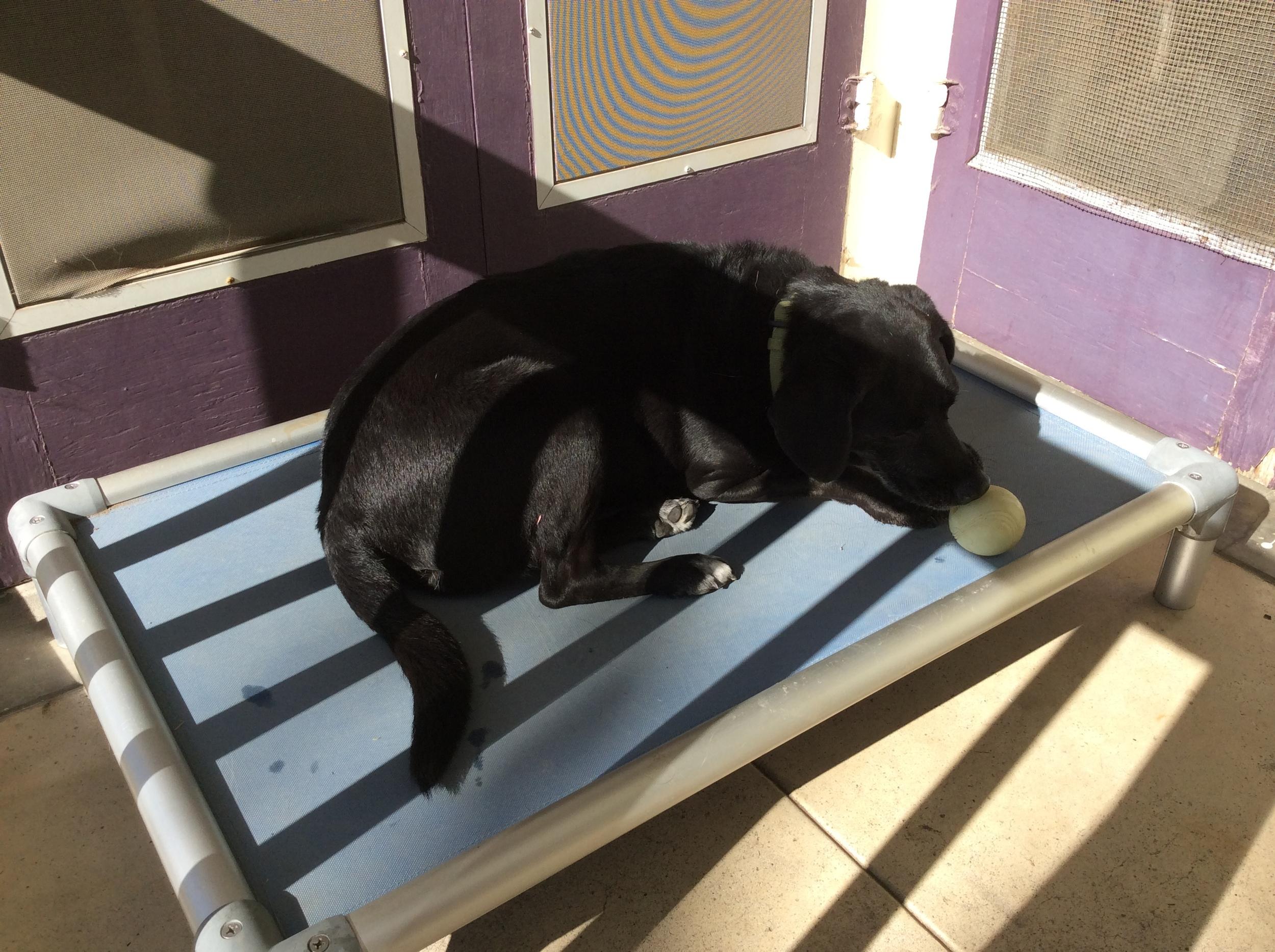 Dakota using his Kuranda bed.
