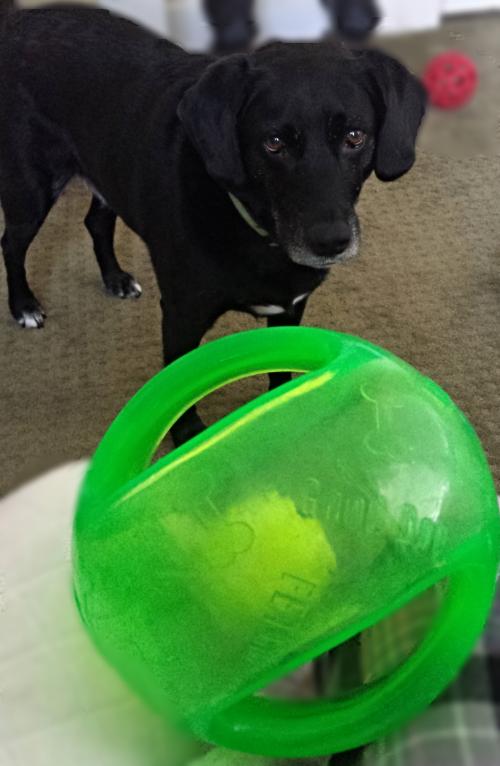 Dakota and the Odd Ball.