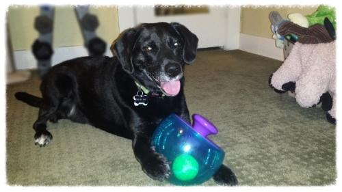 Dakota with the Rocket Ball.