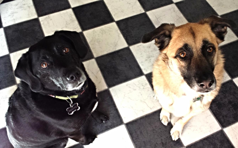 Look how well Dakota and Carolina sit for their Meaty Treats!