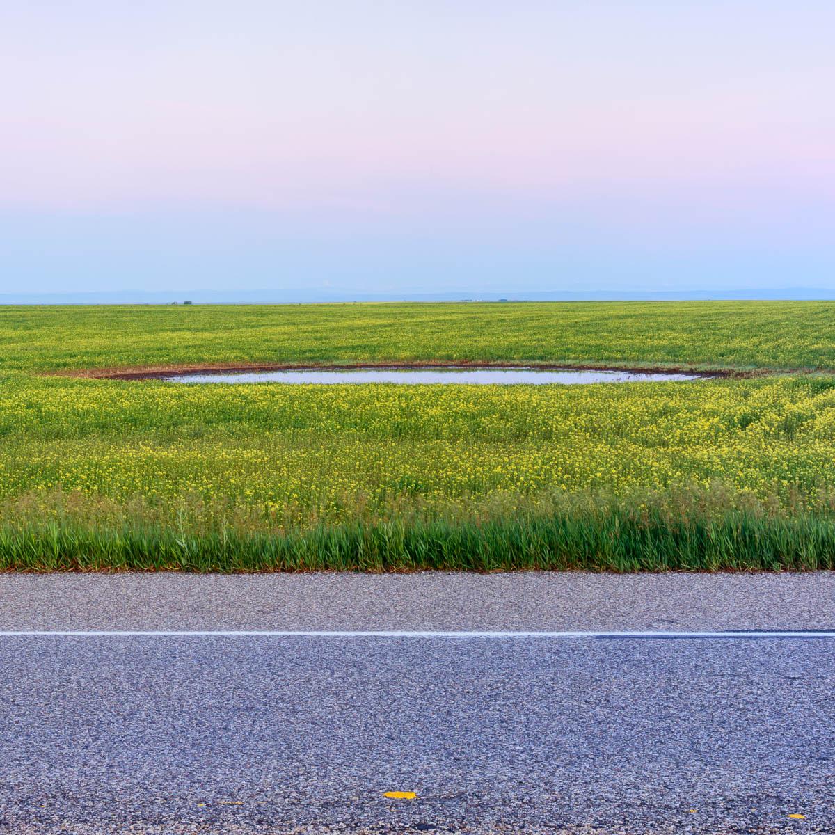 Pond, Alberta, 2005
