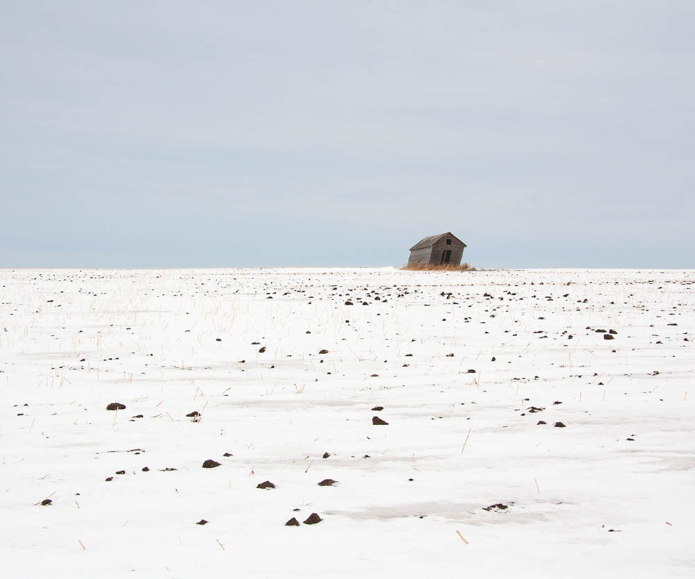 Clumps and Abandoned Shed, Alberta, 2012