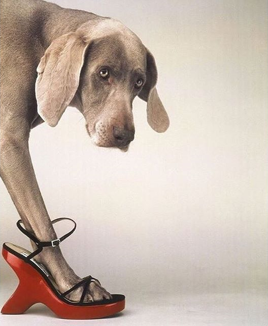 """How far have you walked for men who have never held your feet in their laps."" #warsanshire @williamwegman"