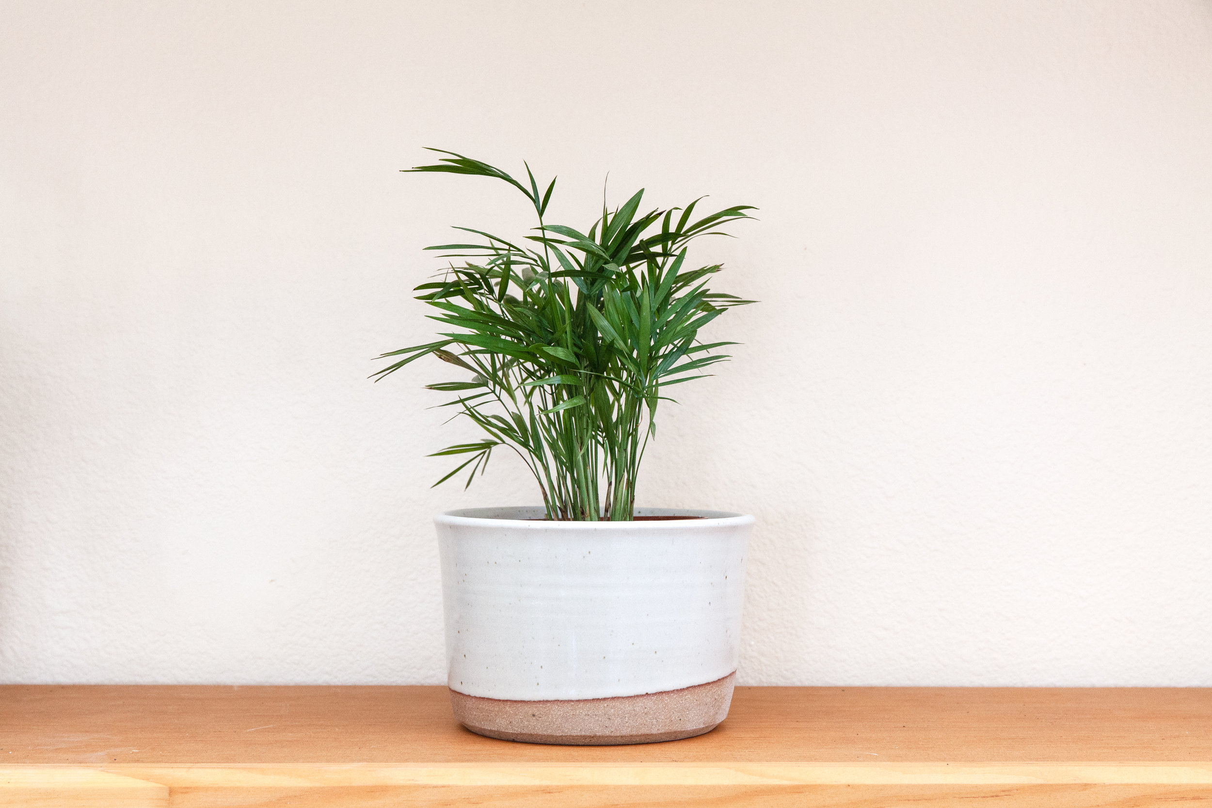 This Hanselmannn Pottery ceramic plant holder  adds an upgraded, unique touch to any living area.