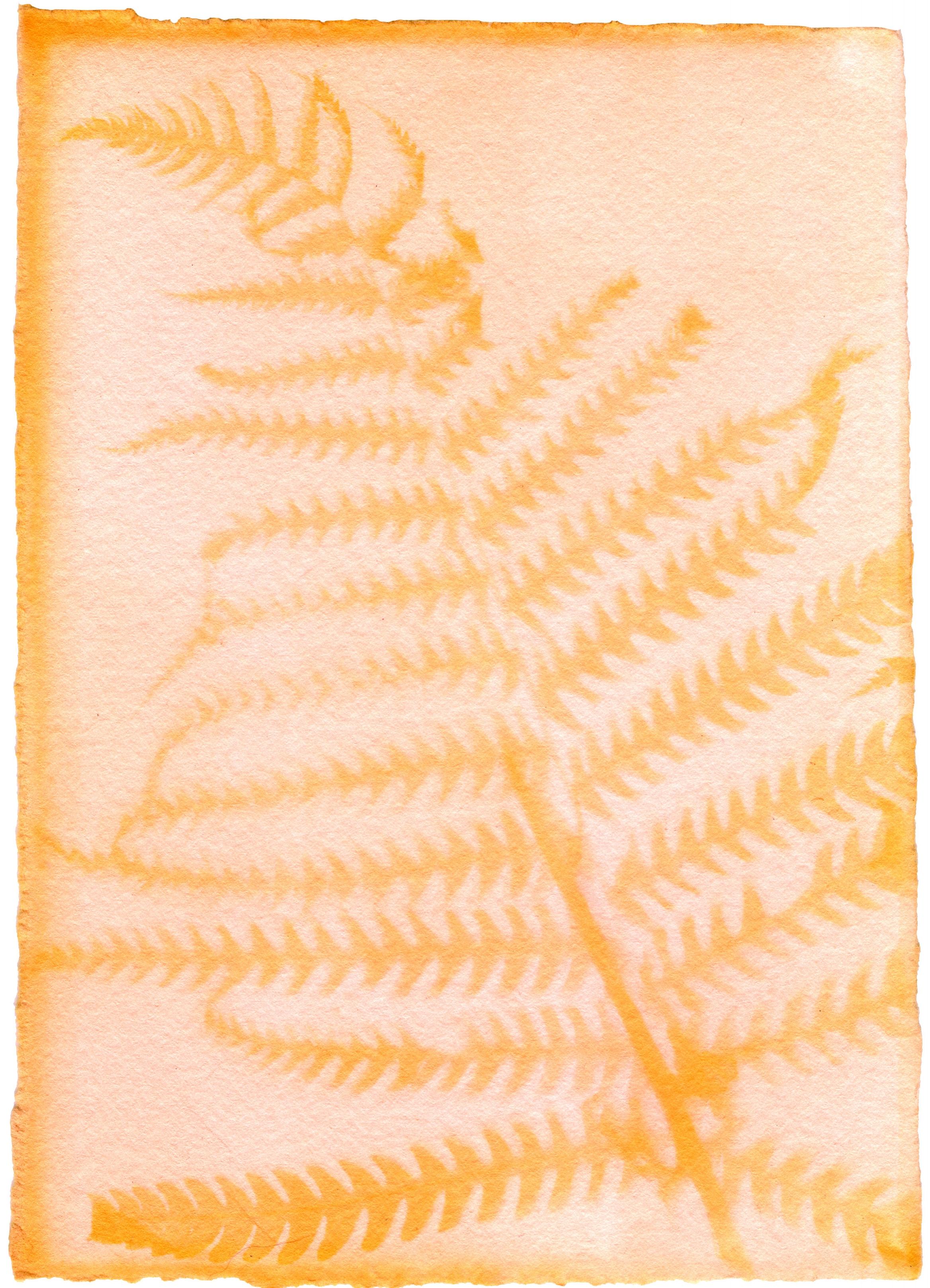 "Matteuccia Struthiopteris with Achiote Emulsion with Matteuccia Struthiopteris Skim Coat, 7"" x 5"", 2018"