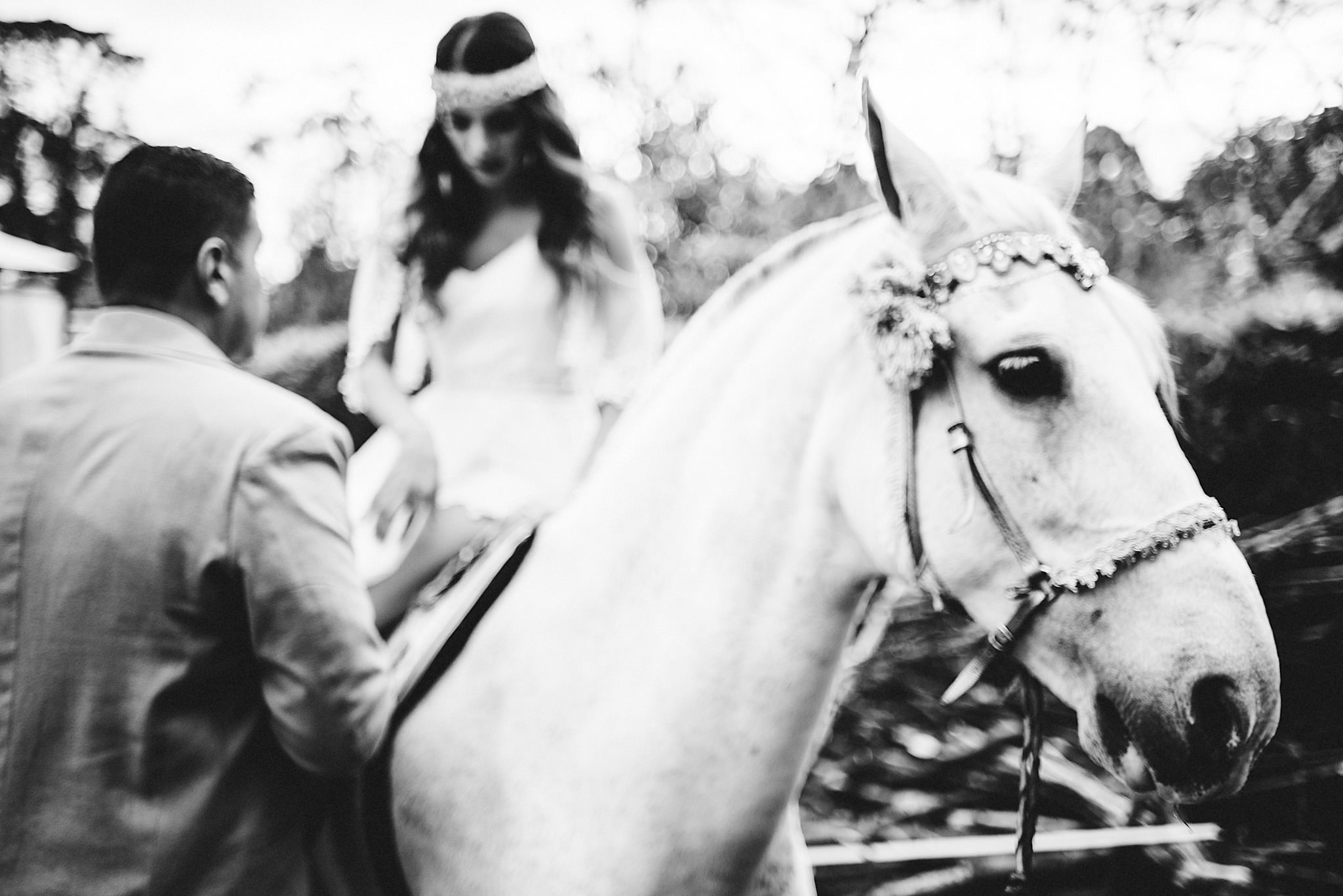 horse in wedding photography
